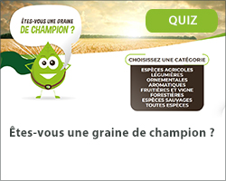 Êtes-vous une graine de champion ?
