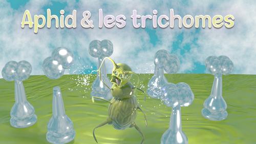 Aphid et les trichomes