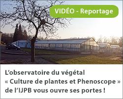 L'observatoire du végétal « Culture de plante et Phenoscope » de l'IJPB vous ouvre ses portes !