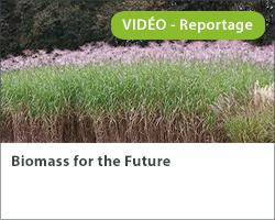 Biomass for the Future