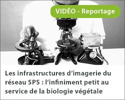 Les infrastructures d'imagerie du réseau SPS : l'infiniment petit au service de la biologie végétale