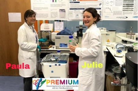 Freezing Jurkat cells protected with FOS and GOS developed at PREMIUM