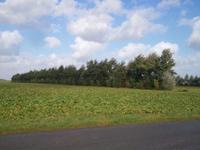 haie dans la plaine pîcardeWP_001497