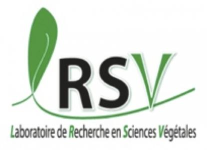 Équipe Protéines Pariétales et Développement