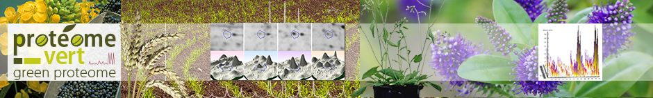 Bienvenue sur le site du protéome vert