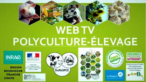 Replay WebTV Polycuture-Elevage