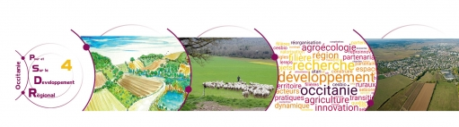 Bienvenue sur le site de PSDR 4 Occitanie