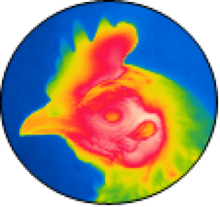 Atelier 2: Phenotyping strategies to quantify animal adaptability