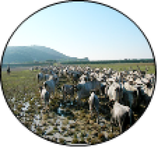 Atelier 3: Adapting Farming systems to Climate Change