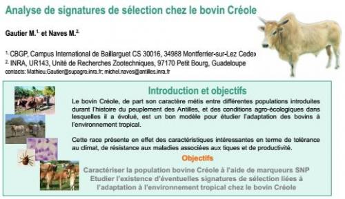 Analyse de signatures de sélection chez le bovin Créole