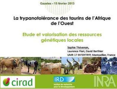La trypanotolérance des taurins de l'Afrique  de l'Ouest