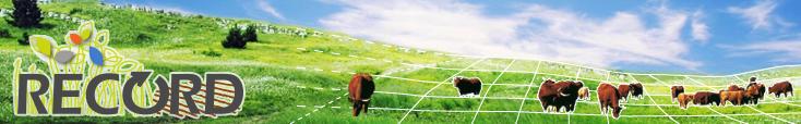RECORD vaches dans un pré