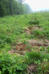 Site PILOTE de Villiers-Nonains (89) : article dans Forêts Privées de Bourgogne-Franche-Comté