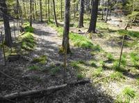 PP en zone fermée: travail du sol et clôture