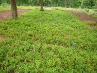 Témoin végétation naturelle, zone ouverte WE 2010