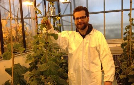 Des plantes plus fortes face au stress