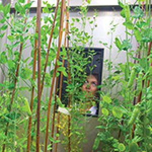 Culture de plantes