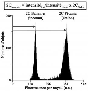 Cytometry