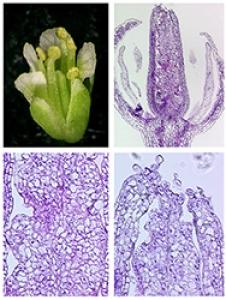 Microscopie - Cytologie