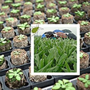 Adaptation des plantes à l'environnement