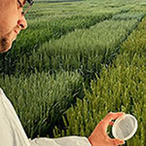 Sélection variétale et biotechnologies