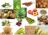 Les sucres : biosynthèse, transport et utilisation chez les végétaux