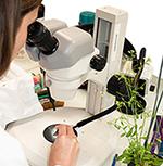 Biologie végétale