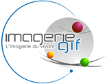 Logo Imagerie Gif