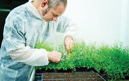 Prestation culture de plantes