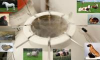 Cryoconservation des ressources génétiques animales Montage réalisé par M. Tixier-Boichard à partir d'images de la photothèque INRAE