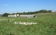 @INRAE, Chaire de biosécurité aviaire ENVT