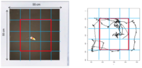 Dispositif d'enceinte ouverte (open-field, à gauche) permettant l'enregistrement de la trajectoire individuelle d'une souris dans une zone délimitée. Le parcours de la souris (en noir, à droite) est enregistré pendant 5 minutes et se répartit en zone interne ou externe par rapport à un carré rouge. Le pourcentage de temps passé en zone interne reflète le niveau de stress de l'animal. Plus l'animal est stressé, plus ce pourcentage est faible