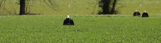 STARTAUP : Stratégies alternatives pour la maîtrise de dégats de taupins sur maïs