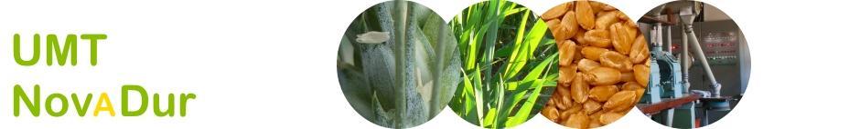 UMT NovaDur Innovations pour une filière blé dur durable