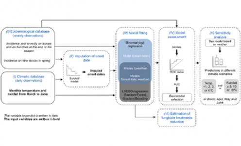 Forecasting severe grape downy mildew attacks using machine learning