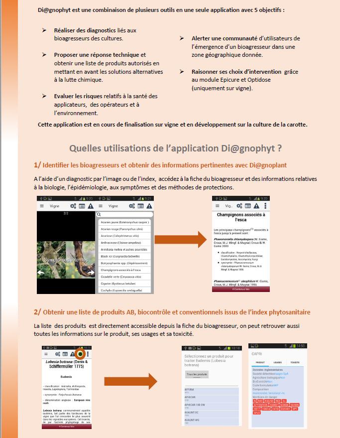 projet diagnophyt1