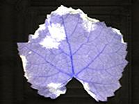 mildiou-hyperspectral3
