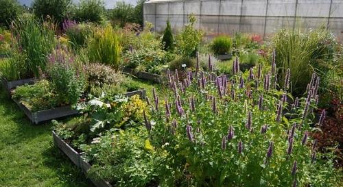 Essai de plantes à utiliser en milieu urbain