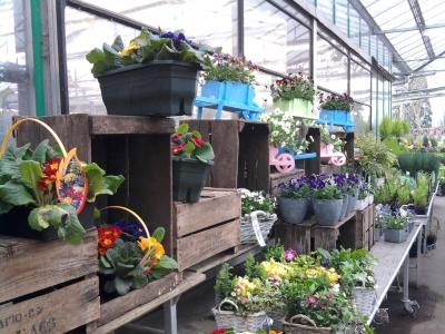 Commercialisation des végétaux
