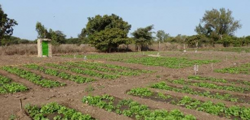 SOERE PRO - Sénégal