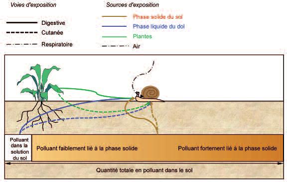 Fig.1 Pauget 2013 FR