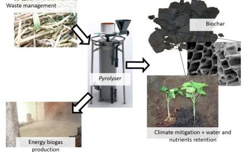 Stockage du carbone et propriétés biologiques