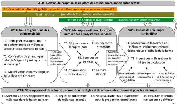 Schéma de la structure du projet