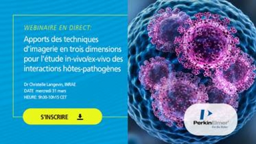 Apports des techniques d'imagerie en trois dimensions pour l'étude des interactions hôtes-pathogènes